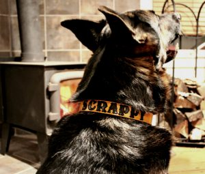 Personalized Leather Dog Collar with Painted Letters