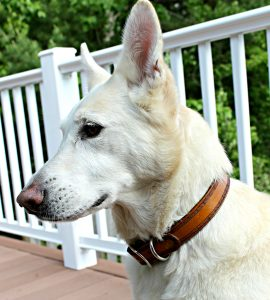 Scallop Southwestern Celtic Border Leather Dog Collar