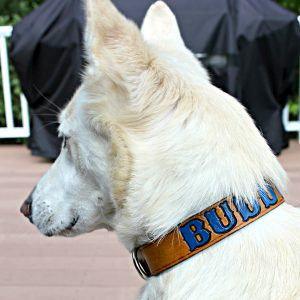 Personalized Painted Leather Dog Collar