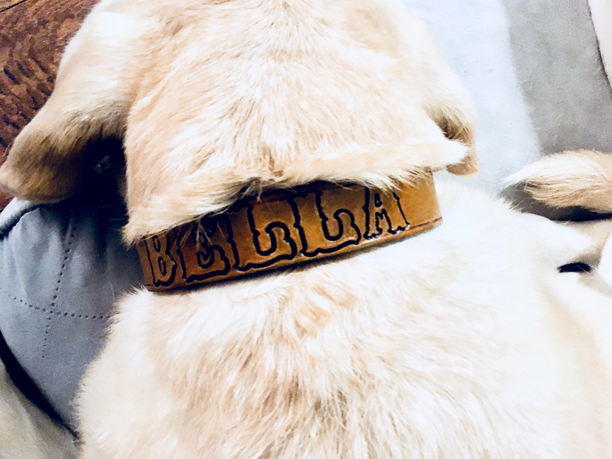 personalized-custom-leather-dog-collar-the-leather-smithy_1