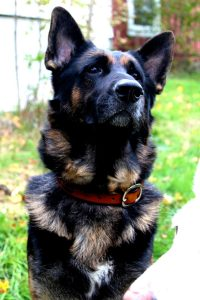 Tooled Leather Dog Collar