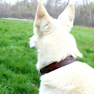 Southwestern Dog Collar