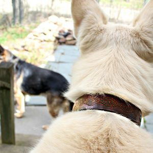 Western Cowboy Dog Collar